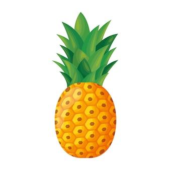 Ananas fruit vector