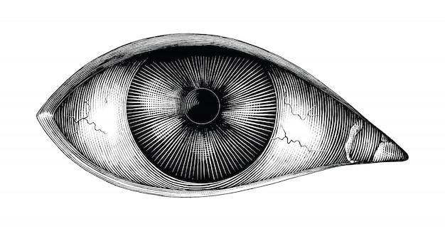 Anatomie van het menselijk oog hand tekenen vintage illustraties geïsoleerd