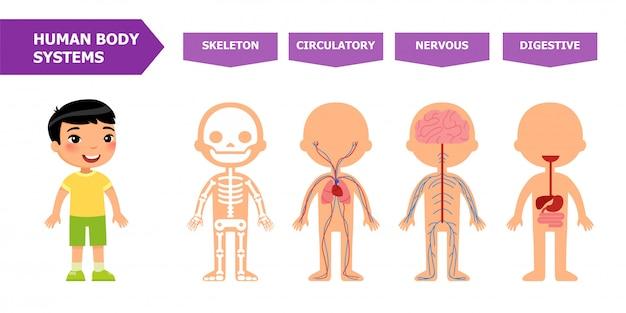 Anatomie voor kinderen.