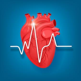 Anatomisch menselijk hart met hartkloppingen en veneus systeem