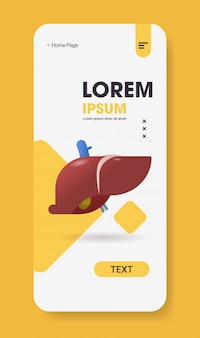 Anatomische lever pictogram menselijk lichaam interne orgel anatomie biologie gezondheidszorg medische concept smartphone scherm mobiele app verticale kopie ruimte plat