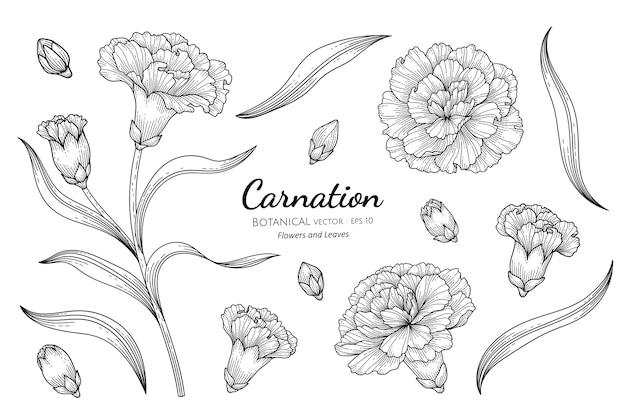 Anjerbloem en blad botanische hand getrokken illustratie.