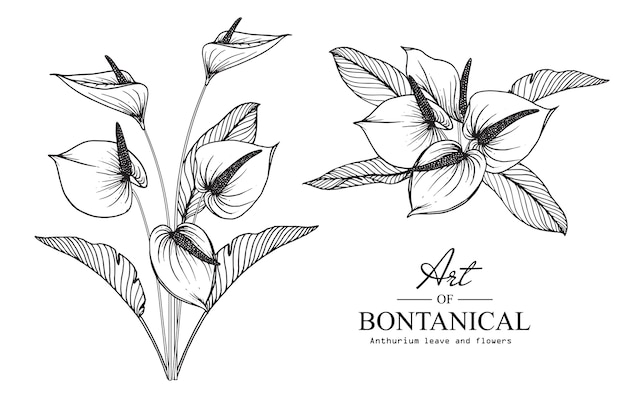 Anthuriumbloem en bladtekening