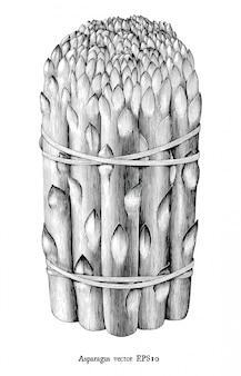 Antieke gravure illustratie van asperges zwart en wit illustraties geïsoleerd