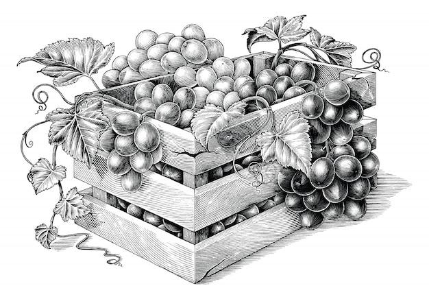 Antieke gravure illustratie van biologische druiven in de mand zwart-wit illustraties geïsoleerd, organische druiven branding inspiratie