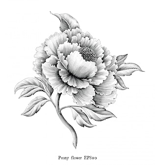 Antieke gravure illustratie van peony bloem tekening vintage stijl zwart-wit-illustraties geïsoleerd