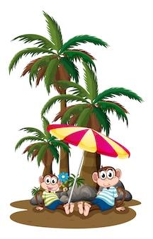 Apen onder de kokospalmen