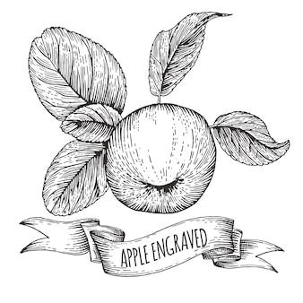 Appel met bladeren, gravure, hand getrokken illustratie