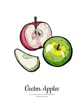 Appels vector geïsoleerd. hele half gesneden appels. de geelgroene rode vruchten overhandigen getrokken illustratie.