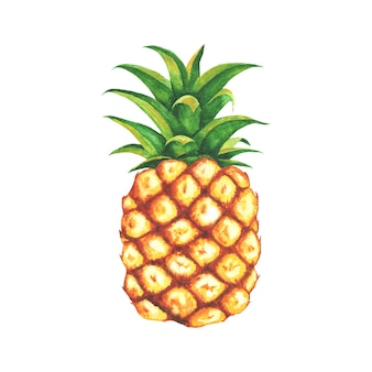 Aquarel ananas illustratie
