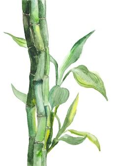 Aquarel bamboe illustratie
