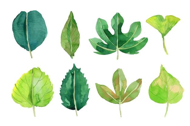 Aquarel bladeren collectie