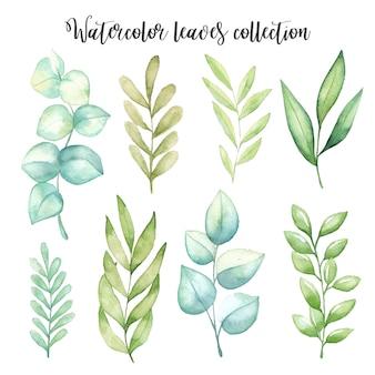 Aquarel bladeren instellen