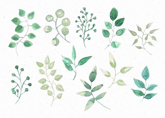 Aquarel bladeren