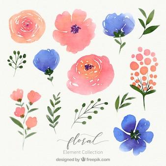Aquarel bloemen element collectie