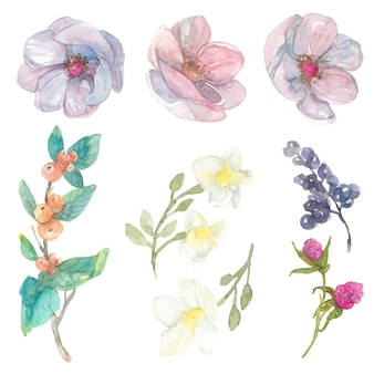 Aquarel bloemen elementen