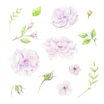Aquarel bloemen set met delicate witte bloemen en thee roos