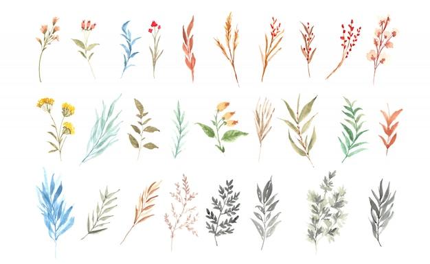 Aquarel bloemencollectie