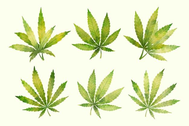 Aquarel cannabis bladeren