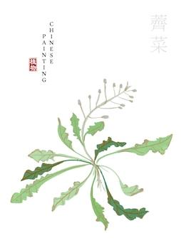 Aquarel chinese inkt verf kunst illustratie natuur plant uit the book of songs shepherd's purse.