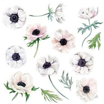 Aquarel collectie van witte anemonen, bloemen en bladeren