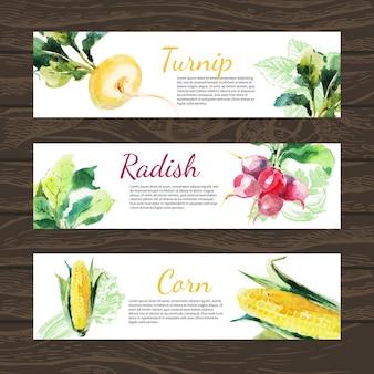 Aquarel en schets groenten biologisch voedsel horizontale banner set. ontwerp met maïs, radijs, raap. vector illustratie