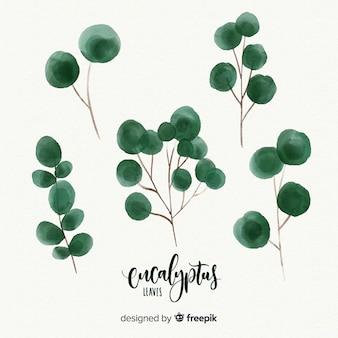 Aquarel eucalyptus bladeren instellen