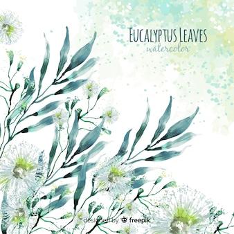 Aquarel eucalyptus laat achtergrond