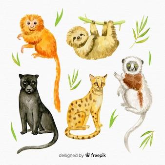 Aquarel exotische tropische dieren collectie