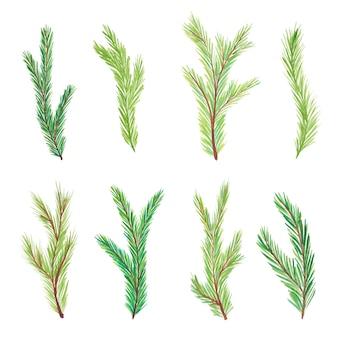 Aquarel fir takken. boomtakken. hand getekend aquarel fir takken geïsoleerd