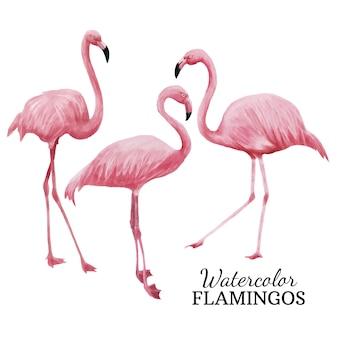 Aquarel Flamingo's