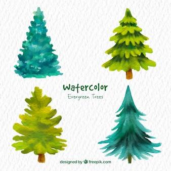 Aquarel groenblijvende bomen