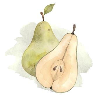 Aquarel groene peren fruit