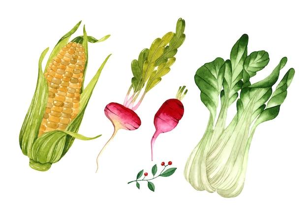 Aquarel groenten set geïsoleerde elementen maïs radijs sla op wit oppervlak