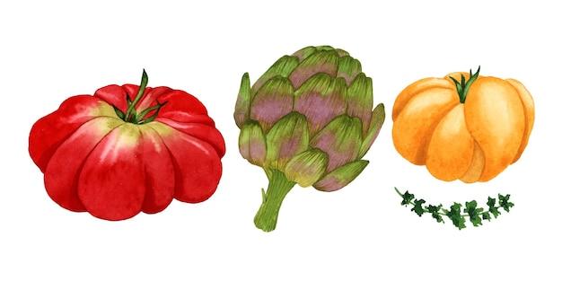 Aquarel groenten set geïsoleerde elementen tomaat artisjok tijm op wit oppervlak
