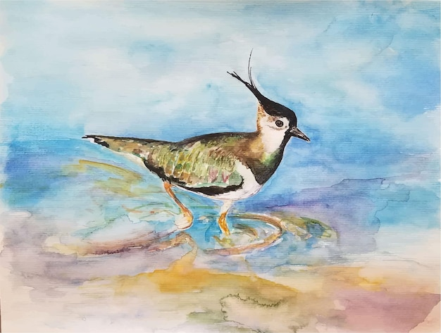 Aquarel handgetekende vogel illustratie