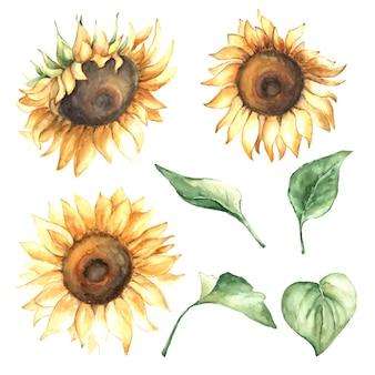 Aquarel herfst set met zonnebloemen en bladeren.