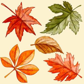Aquarel herfstbladeren collectie