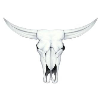Aquarel illustratie met een schedel van een buffel