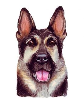 Aquarel illustratie van een grappige hond. populair hondenras. hond. duitse herder. met de hand gemaakt karakter dat op wit wordt geïsoleerd