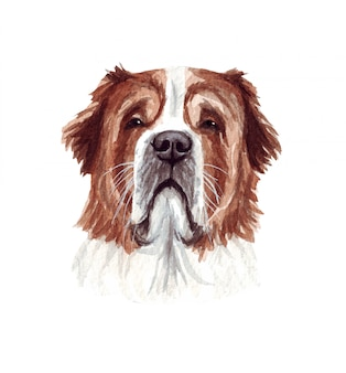 Aquarel illustratie van een grappige hond. populair hondenras. hond st. bernard. met de hand gemaakt karakter dat op wit wordt geïsoleerd