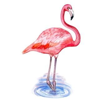 Aquarel illustratie van flamingo op wit