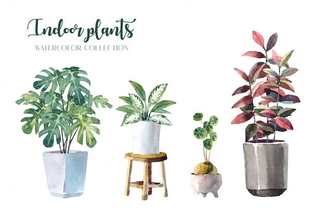 Aquarel kamerplanten (monstera, lady palm, chinese evergreen, rubberplant en stephania erecta)