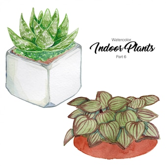 Aquarel kamerplanten