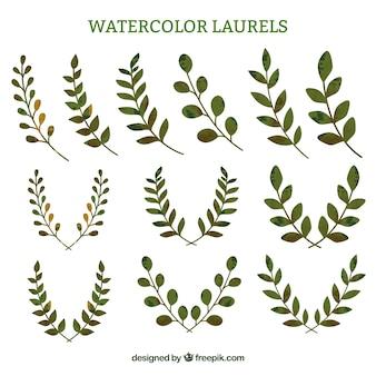Aquarel laurier takjes