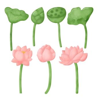Aquarel lotus set.