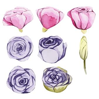 Aquarel mooie bloemknoppen geïsoleerd op wit