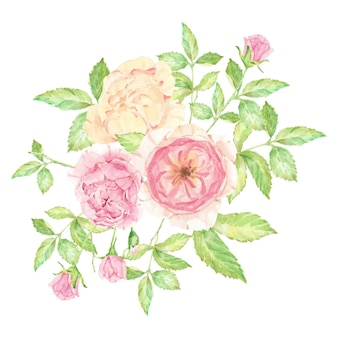 Aquarel mooie engelse roos bloemboeket geïsoleerd
