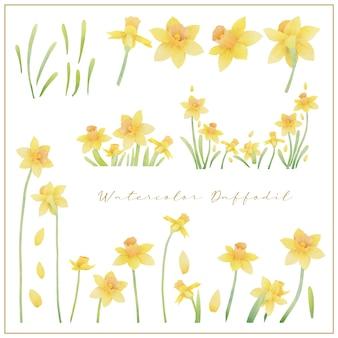 Aquarel narcis bloemen collectie vector