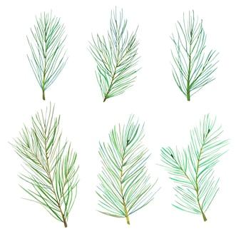 Aquarel pijnboomtakken instellen. forest dennenboom naalden takken